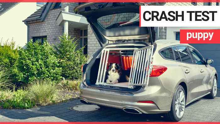 Drivers are putting lives at risk by not strapping their dogs into their cars