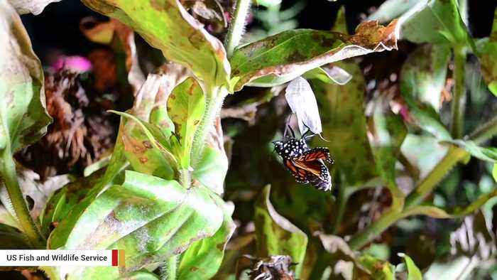 Insect Populations Are Experiencing Massive Declines And The Impact Could Be 'Catastrophic'