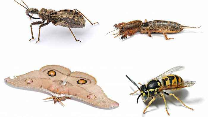 Insect Apocalypse: 40% of world species threatened with extinction, report finds