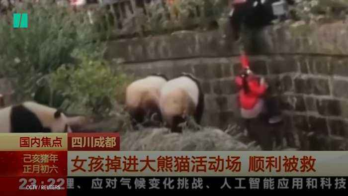 Girl Made Dramatic Escape From Panda Enclosure