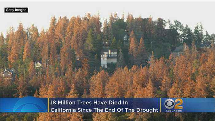 18 Million Trees Died In California Since End Of Drought