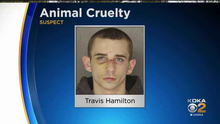 Police Arrest Man Who Shot Beechview Family's Dog