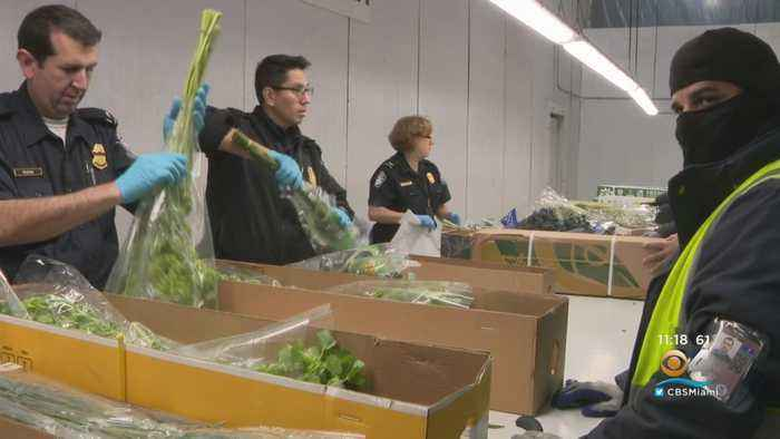 Customs Agents Hard At Work Inspecting Flowers Ahead Of Valentine's Day