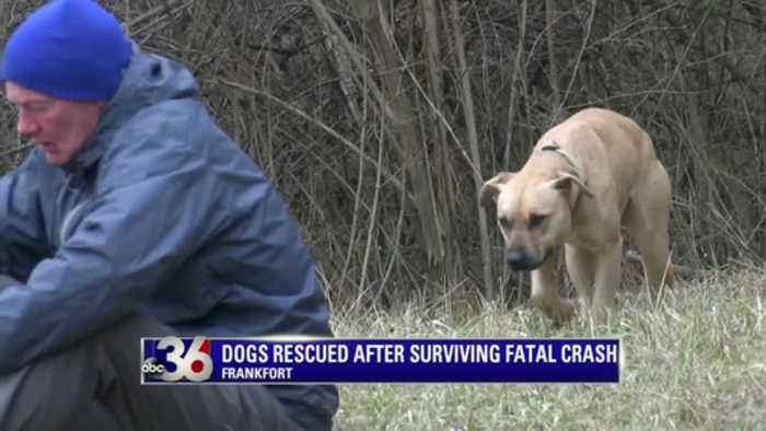 dog search in frankfort