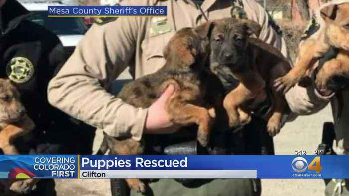 Mesa County Sheriff's Deputies Rescue Puppies From Bitter Cold