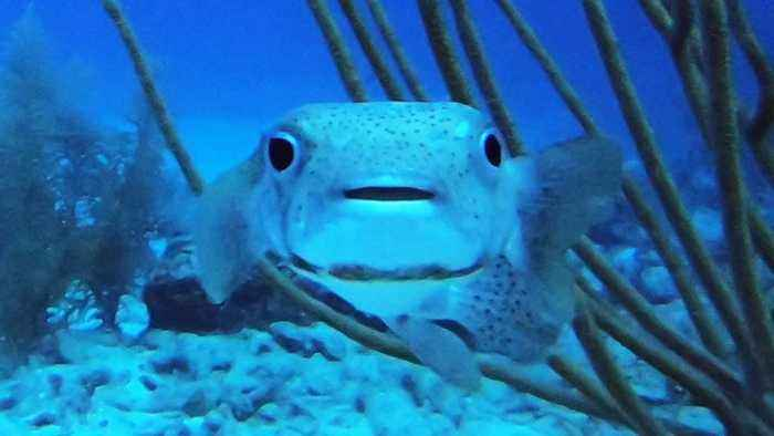 Adorable baby faced fish has surprisingly ferocious side if needed