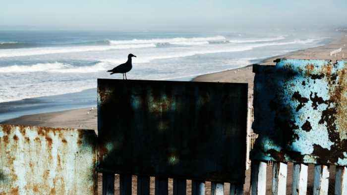 Emergency Over the Border Wall Endangers Animals Further