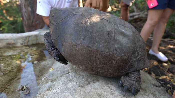 TORTOISE THOUGHT EXTINCT FOUND IN GALAPAGOS ISLAND