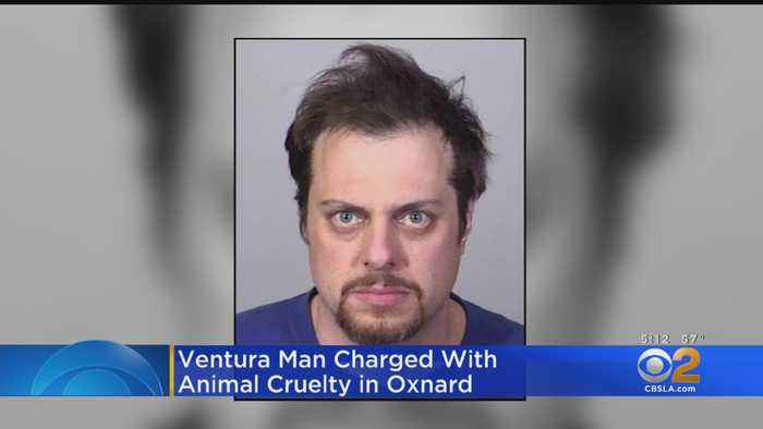Ventura Man Accused Of Animal Cruelty After Shooting Cat With Crossbow