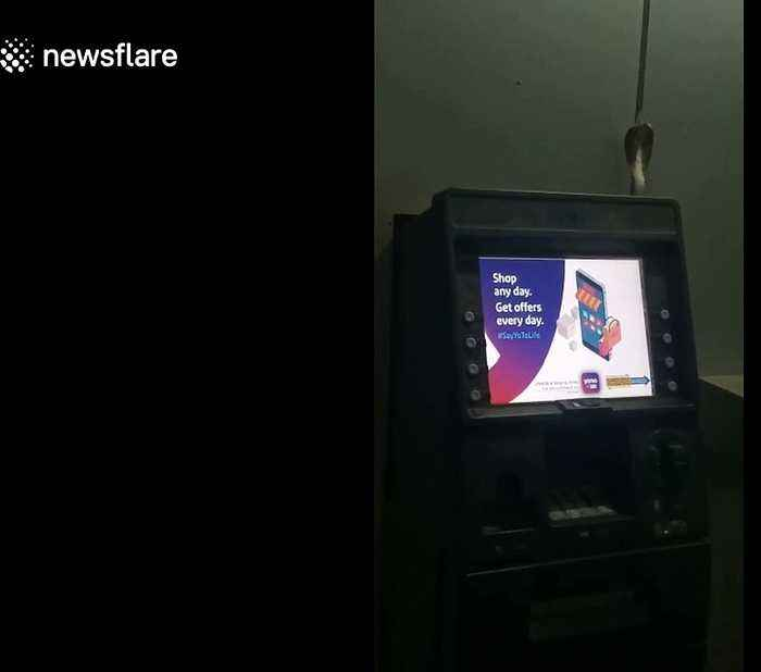 Indian man finds cobra on top of ATM machine