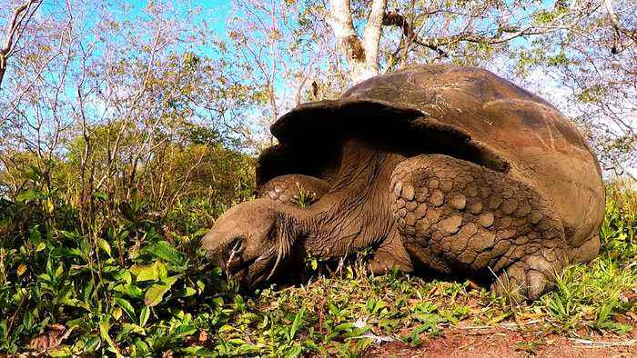 Galapagos tortoises make world headlines after unbelievable discovery