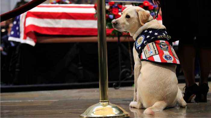 George H.W. Bush's Service Dog Gets New Job Helping Veterans And Service Members