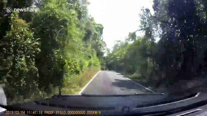 Give way to oncoming elephants! Driver gets jumbo shock as he rounds bend