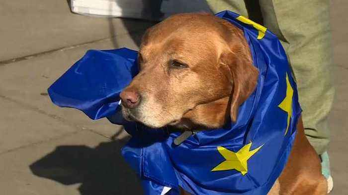 Protesters stage dog's dinner demonstration over Brexit outside Parliament