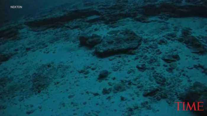 Historic Undersea Exploration Broadcast Conducted from the Indian Ocean