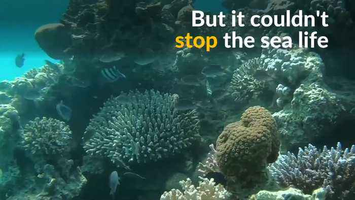 Israel moves pristine corals after restricted beach reopens