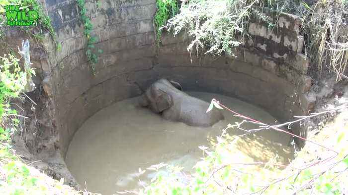 Baby elephant chased into the forest after being rescued from well