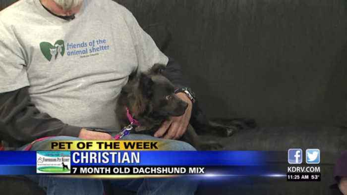 Pet of the Week: Christian