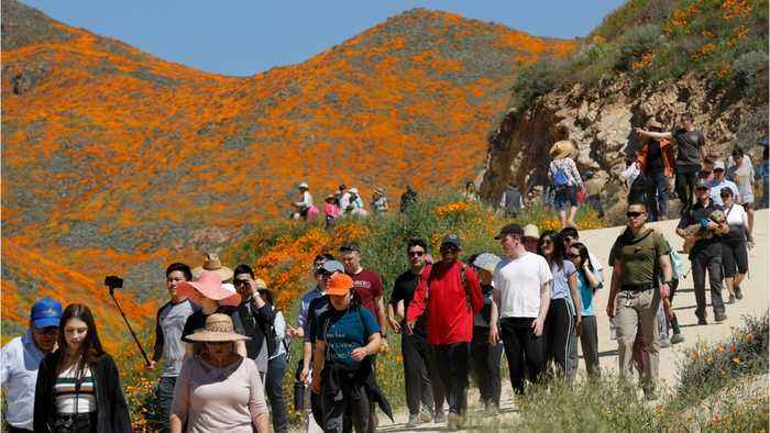 'Poppy Apocalypse' Crowds Descended Upon California City