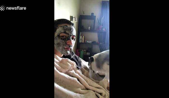 This pup got extra concerned about her owner's new face mask