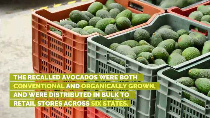 Avocados Recalled in 6 States Due to Listeria Concerns