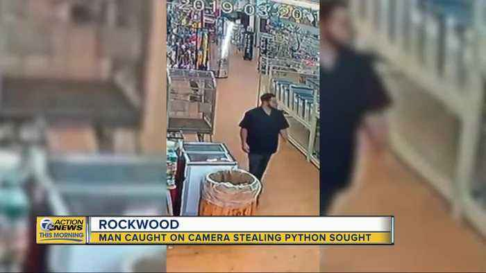 Man caught on camera stealing python from Michigan pet store