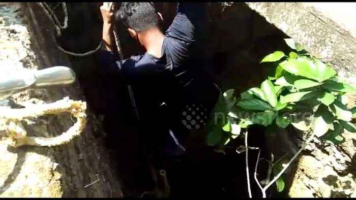 Rescuer risks his life to save deadly snake from dying in well
