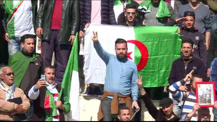 Algeria protests: Army chief backs call for president's exit