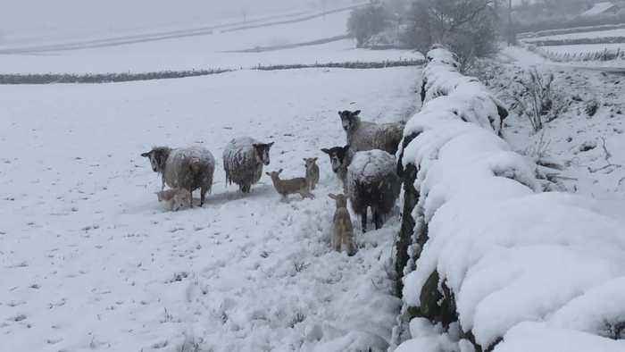 Snow falls in Northumberland as wintry start to spring continues