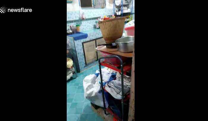Deadly king cobra caught in kitchen of family home