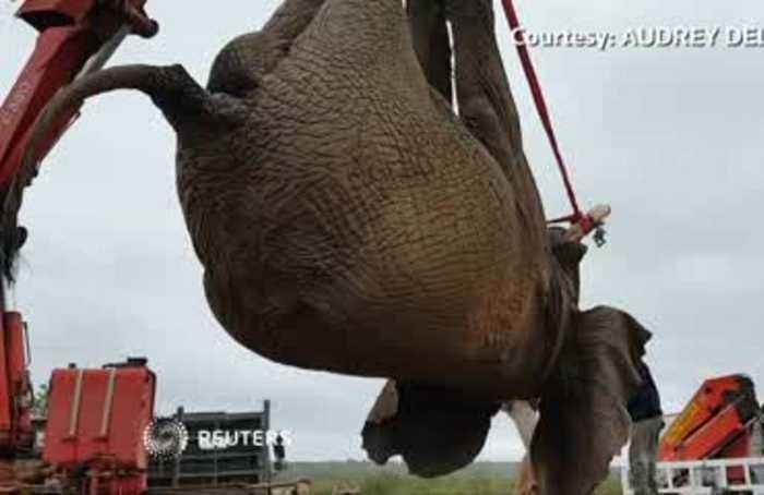 Riff Raff the South African elephant dodges death sentence