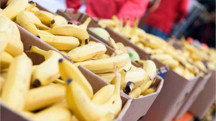 Half Ton Of Cocaine Found In Banana Crates In Germany