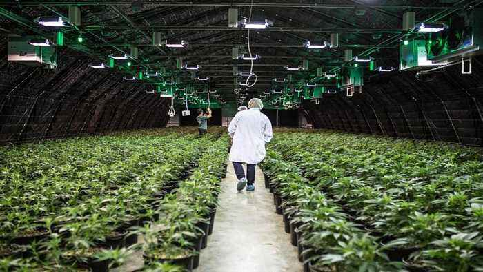 Why CBD's Invasion of the CPG Space is Inevitable