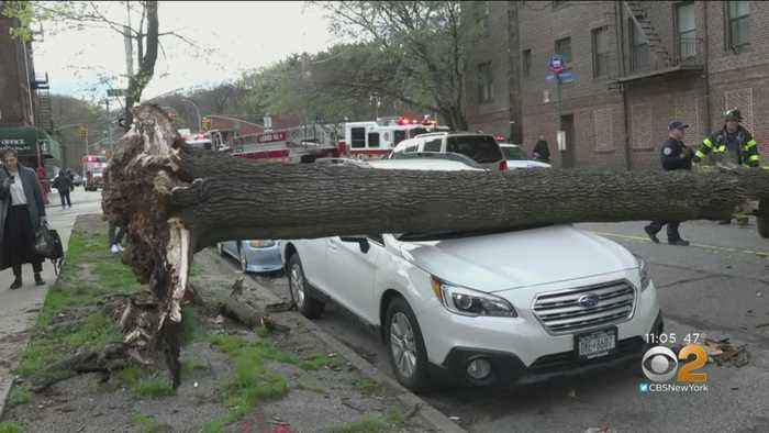 Wind To Blame For Downed Trees, Wall, Power Lines