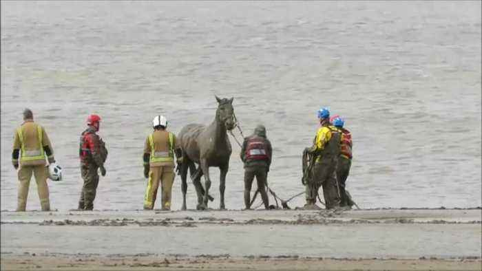Teams of rescuers free horse from mud in United Kingdom