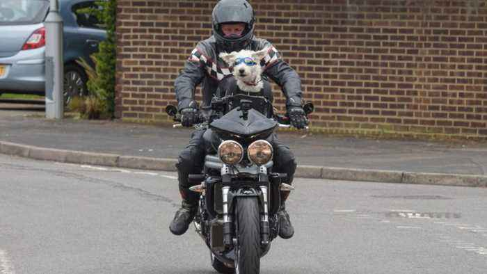 I'd Be Nothing Without My Doggo Pilot! Burly Biker Becomes Online Sensation For Drives Westiepoo Round In Basket On Front Of T