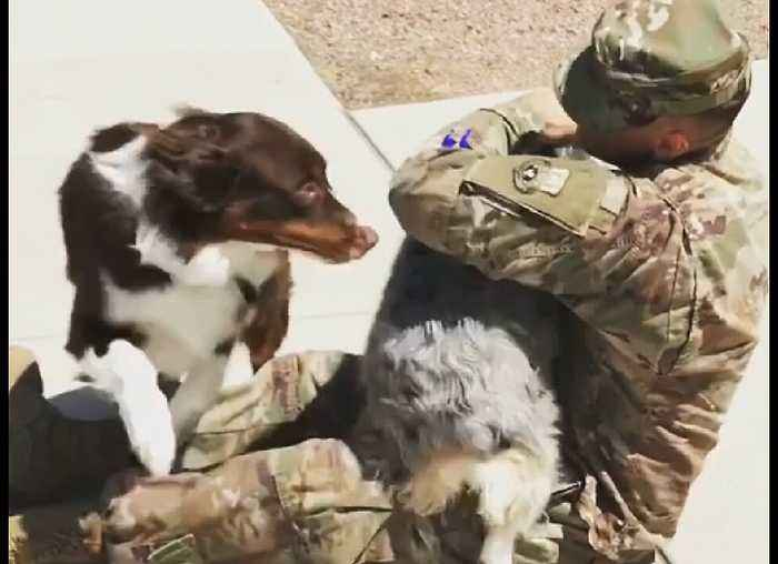 Dogs Welcoming Home Their Owners | Heart-Warming Compilation
