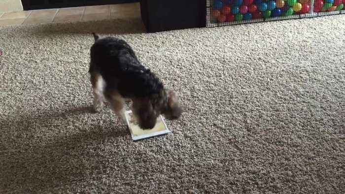 Gaming dog goes for high score on tablet game