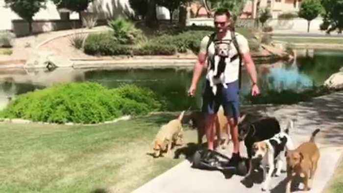 Guy uses hoverboard to walk 7 dogs with ease