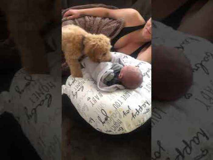 Puppy Adorably Covers Newborn Baby With Blanket