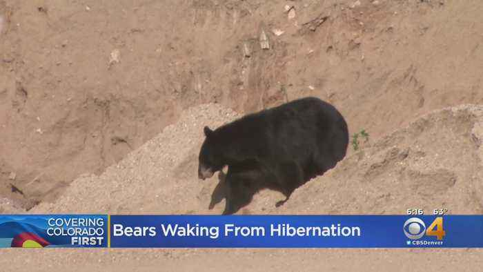 Colorado Officials Warn Residents As Bears Emerge From Dens