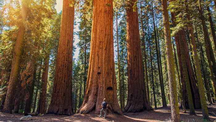 Escape to Nature: All U.S. National Parks Will Be Free to Visitors on April 20