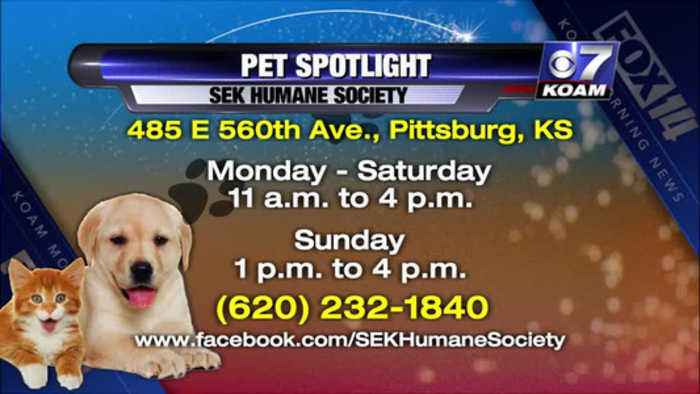 Pet Spotlight