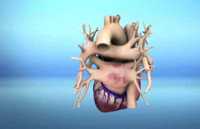 Scientists create world's first 3D-printed heart