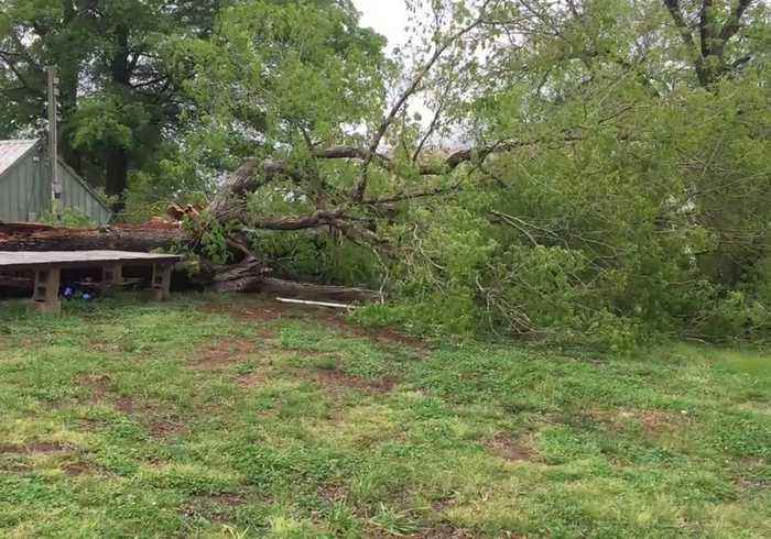 Tree Downed in Raleigh as Damaging Storms Barrel Up Atlantic Coast