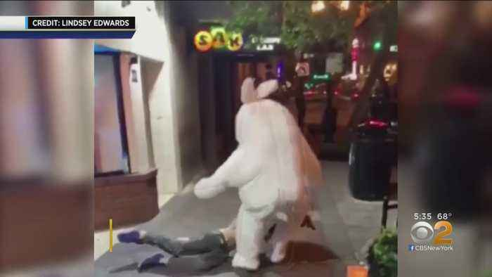 Bunny In Florida Brawl Wanted In New Jersey