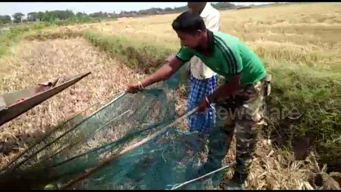 Snake rescuers free deadly cobra trapped in fishing net