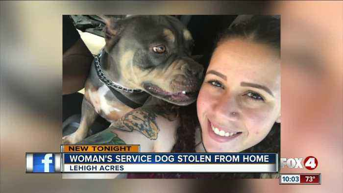 Service dog stolen from woman's home
