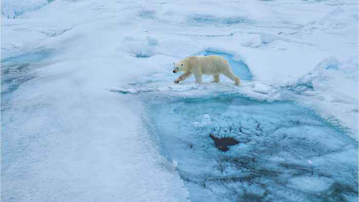 U.S. Wildlife Regulator Slams Trump's Alaska Drilling Study