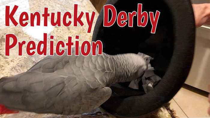Talking parrot predicts winner of the Kentucky Derby
